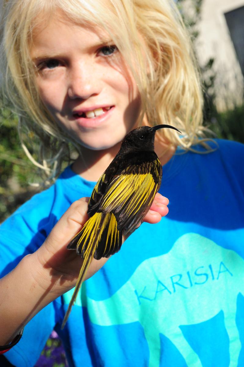 yellowwingedsunbird.jpg