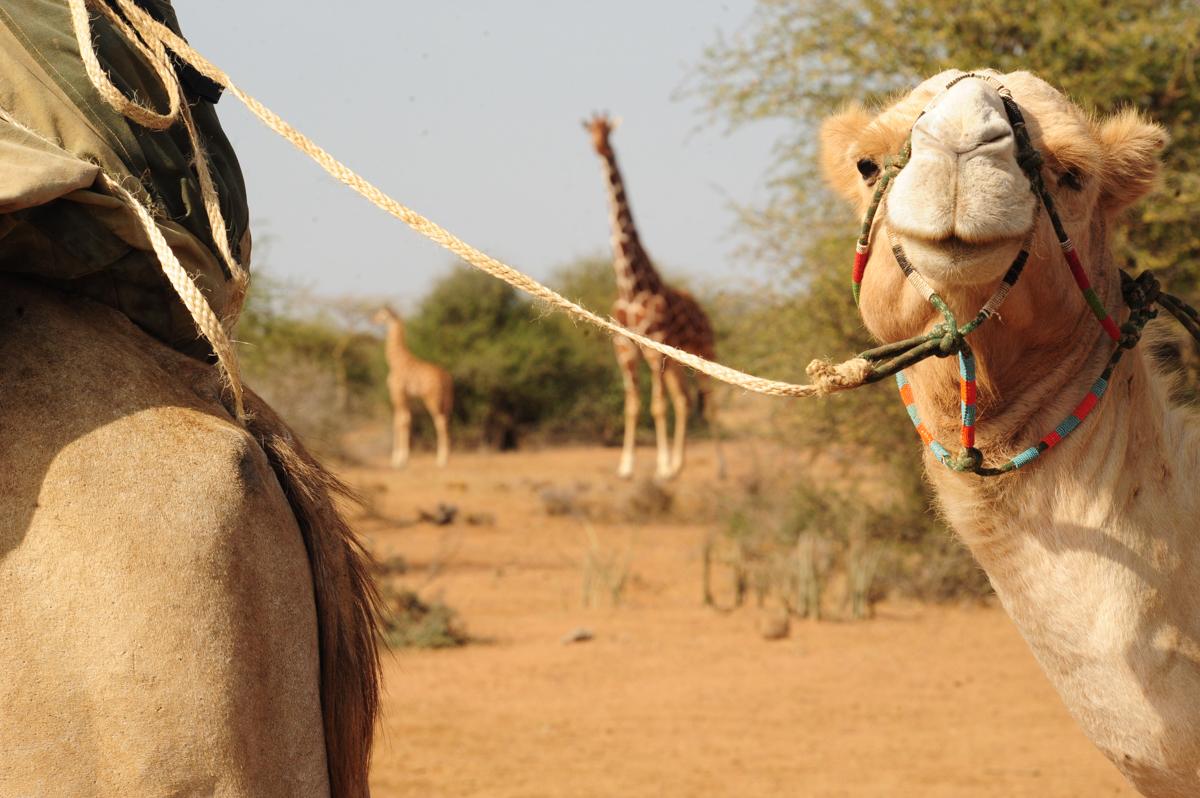 camelsafarisandwildlife.jpg