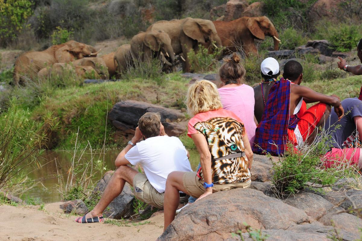 elephantonawalkingsafari.jpg