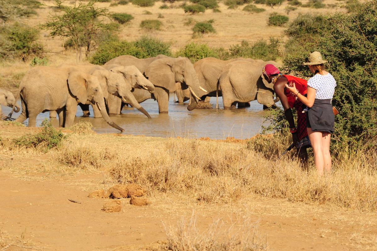 elephantsindam.jpg