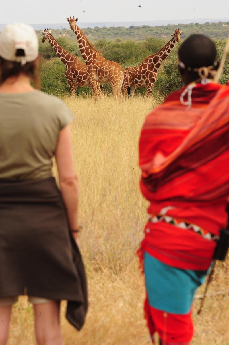 giraffewatchingsafari.jpg