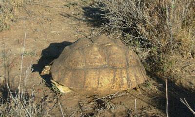 tortoise-1-1.jpg