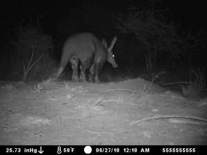 aardvark2-300x225-1.jpg