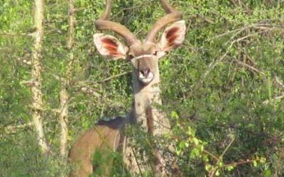 kudu_greater-400x250.jpg