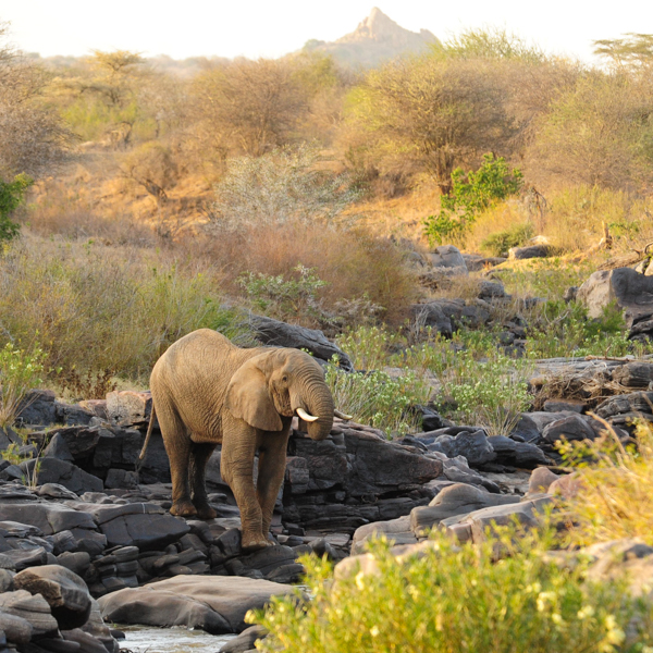 elephantonriver.jpg