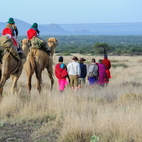 Mobile Camel-Supported Walking Safaris - Explore and experience the region on foot as we walk from site to site, supported by our camels who carry all the equipment. Accommodation ranges from luxury to basic.