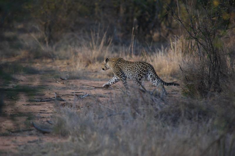 3 Night tumaren walking Safari - A three night walking safari spanning the Tumaren conservation area and neighboring land.