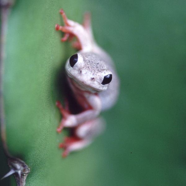 treefrog-1.jpg