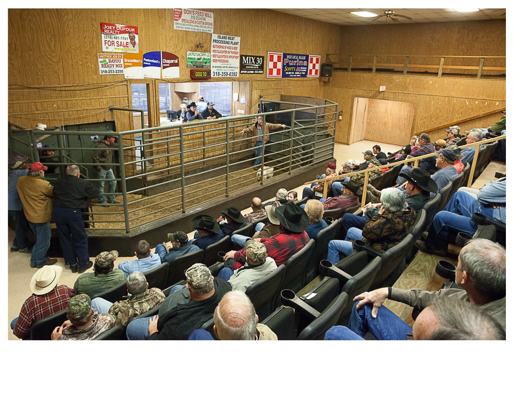 Livestock Auction, Mansura, LA