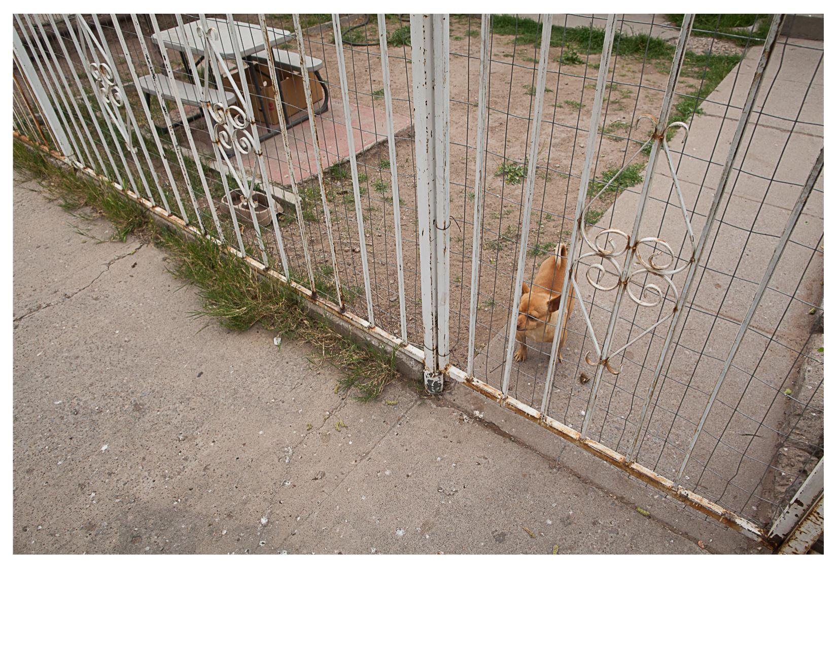 Simon the Dog, El Paso, TX