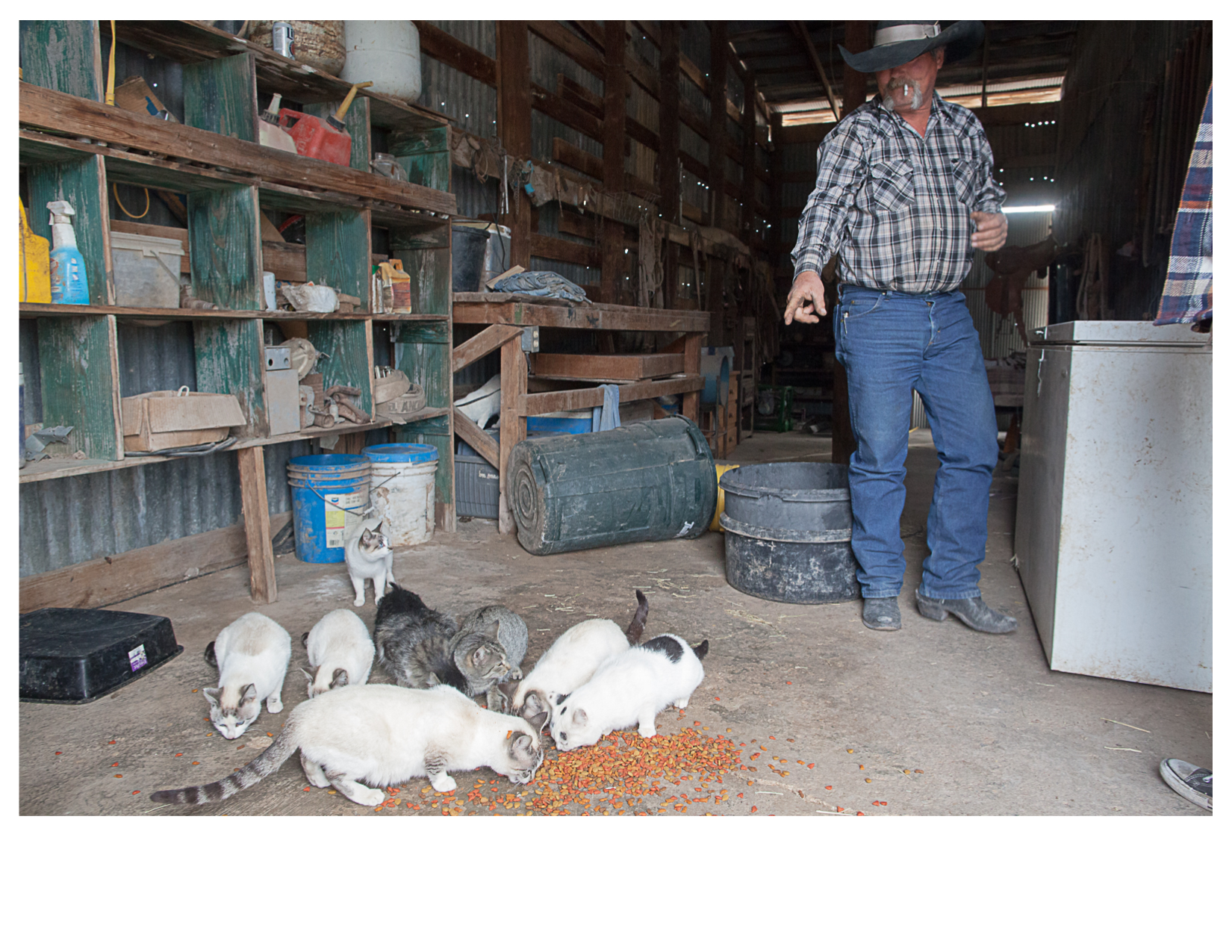 Marty and Barn Cats, West of Alpine, TX
