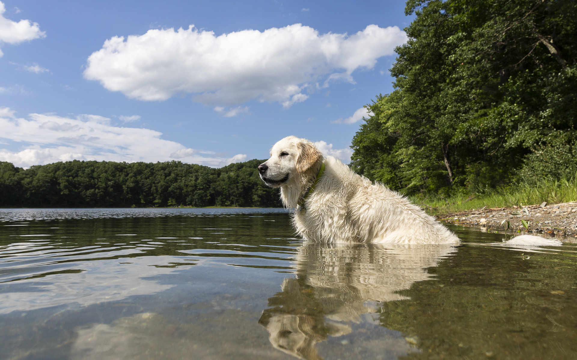 """""""I've been a regular for years so I get to go on off-leash adventures, this is my favorite watering hole to cool off in on hot days! It really feels like summer camp."""" - - SunnyBoarder"""