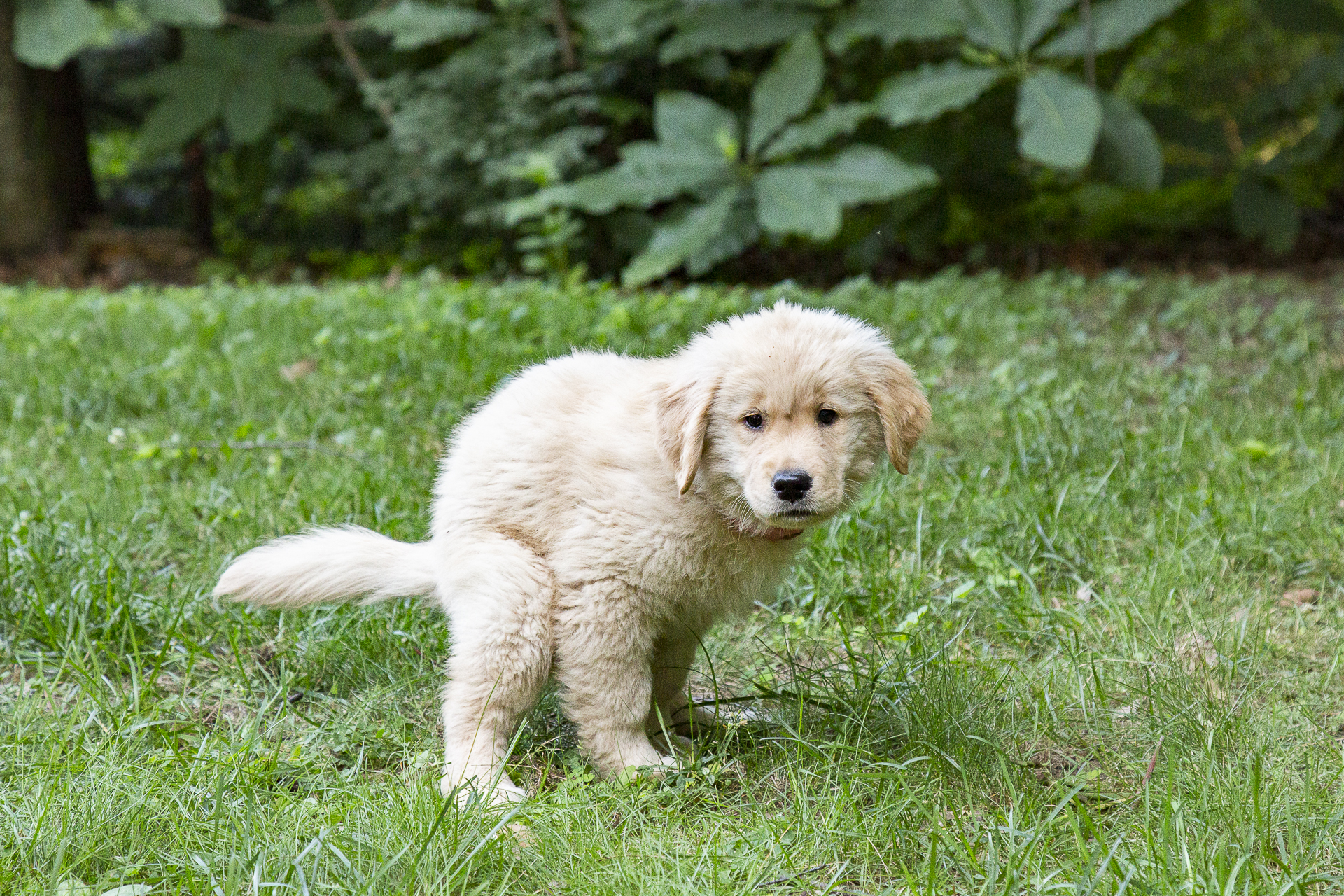 """Look at me, I'm potty trained!! - - Lucille """"Furball""""Puppy Academy"""