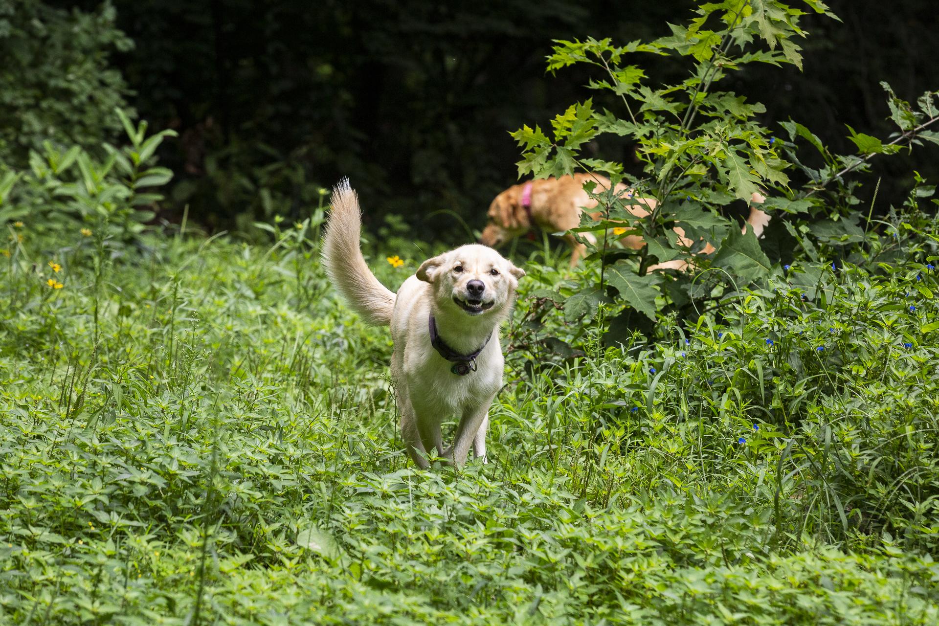 YAAAAAAAAAAYYYYYYYY!!!!!!!! I LOVE IT HERE! WEEEEEEEEEE I HAVE THE ZOOOOOOOMIES AND ROOM TO RUN!!! - - CaliBoarder