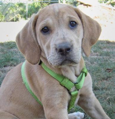 006-xena-puppy-training-testimonial.jpg