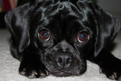 007-pivo-puppy-training-review.jpg