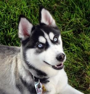 010-charlie-puppy-training-testimonial.jpg