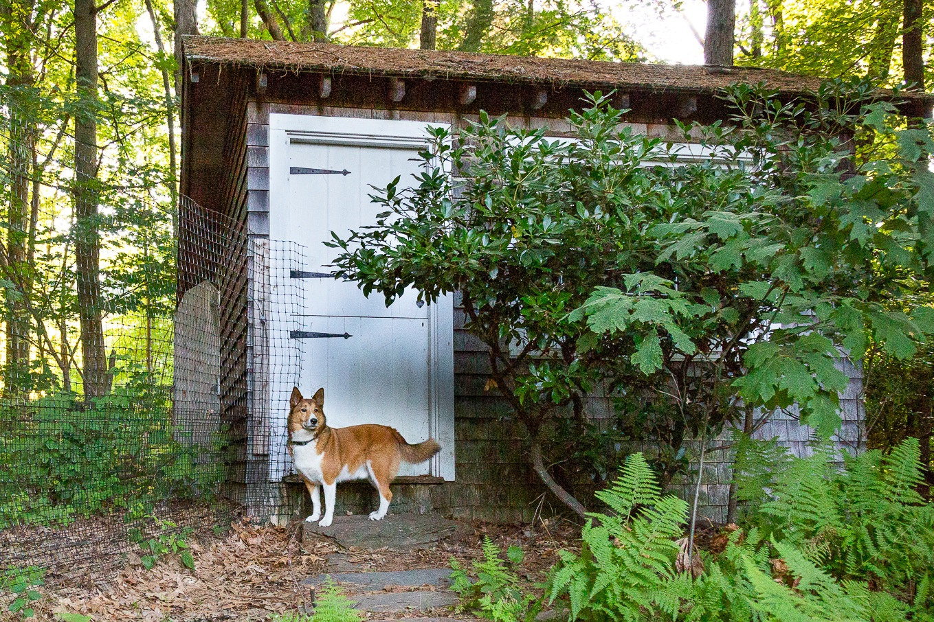 """""""I'm a big fan of the wooded area for sniffing out chippies and sittin' in the shade. I love how the huge yard never gets boring!"""" - - RexBoarder"""