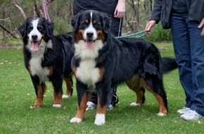 011-kelda-xanadu-adult-dog-training-review.jpg
