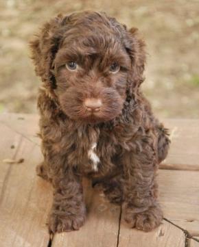 012-baker-best-puppy-training-review.jpg