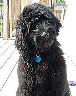 002a-Woody-dog-training-testimonial.jpg
