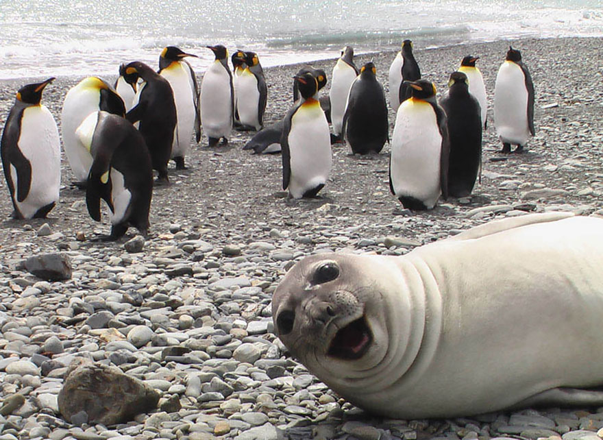 seal and penguin photobomb_goog.jpg