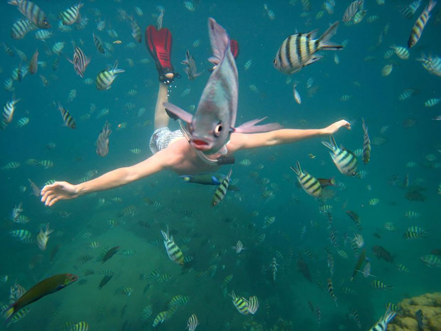 fish over diver's head photobomb_goog.jpg