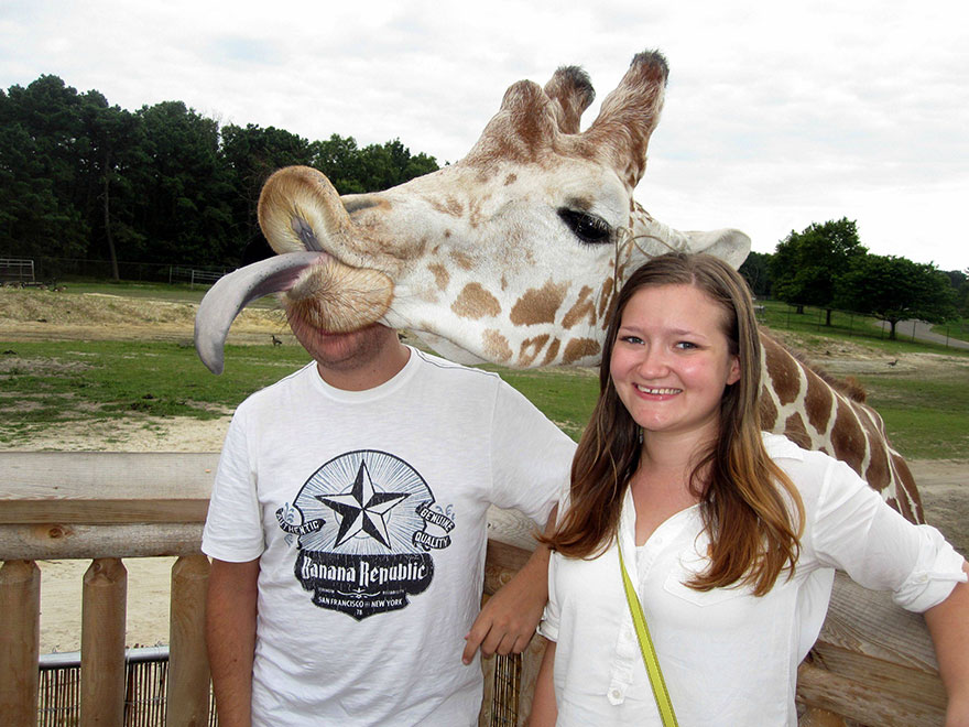 giraffe photobombing couple.jpg
