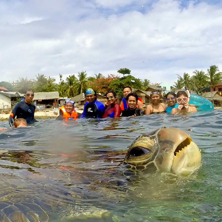 sea turtle & family photobomb_goog.jpg