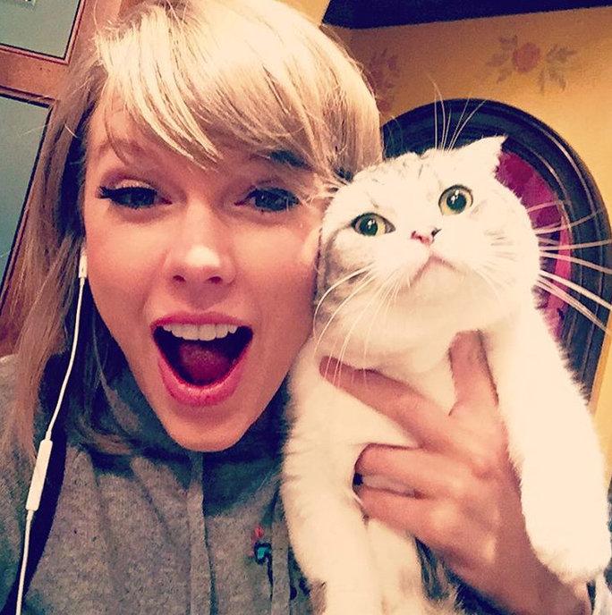 taylor swifts cat.jpg