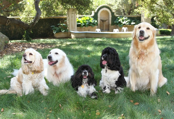 oprah's dogs_goog.jpg