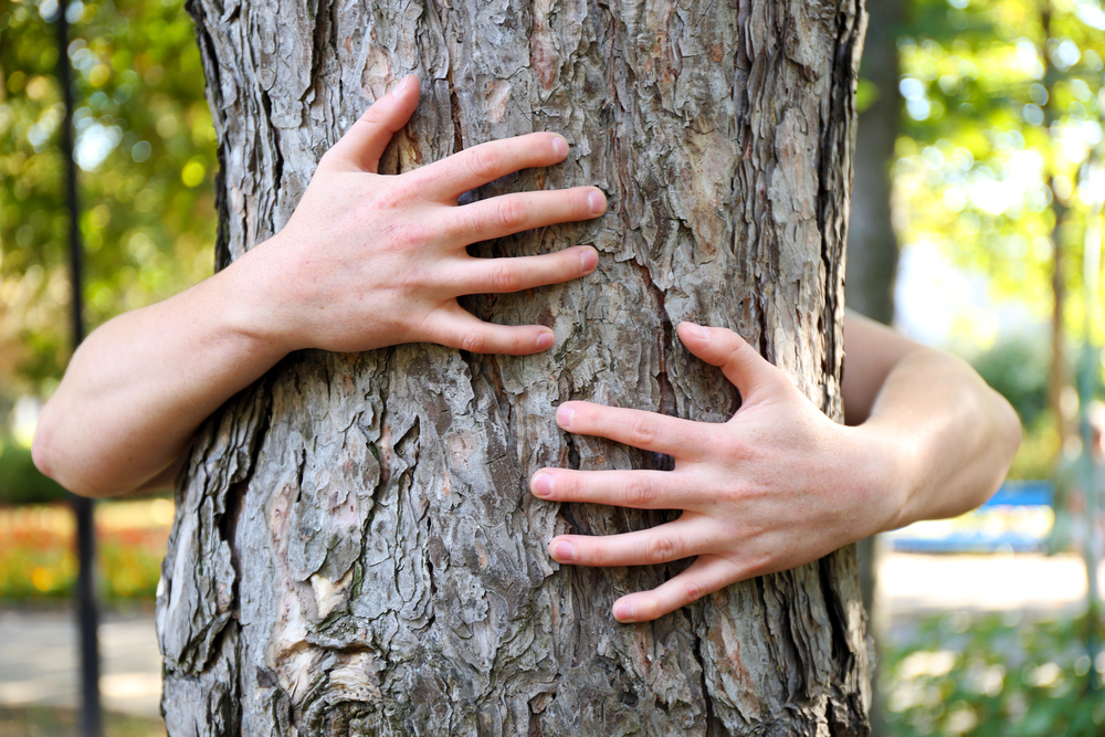 tree bear hug.jpg