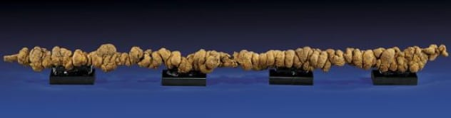 meter long fossilized poop_goog.jpg