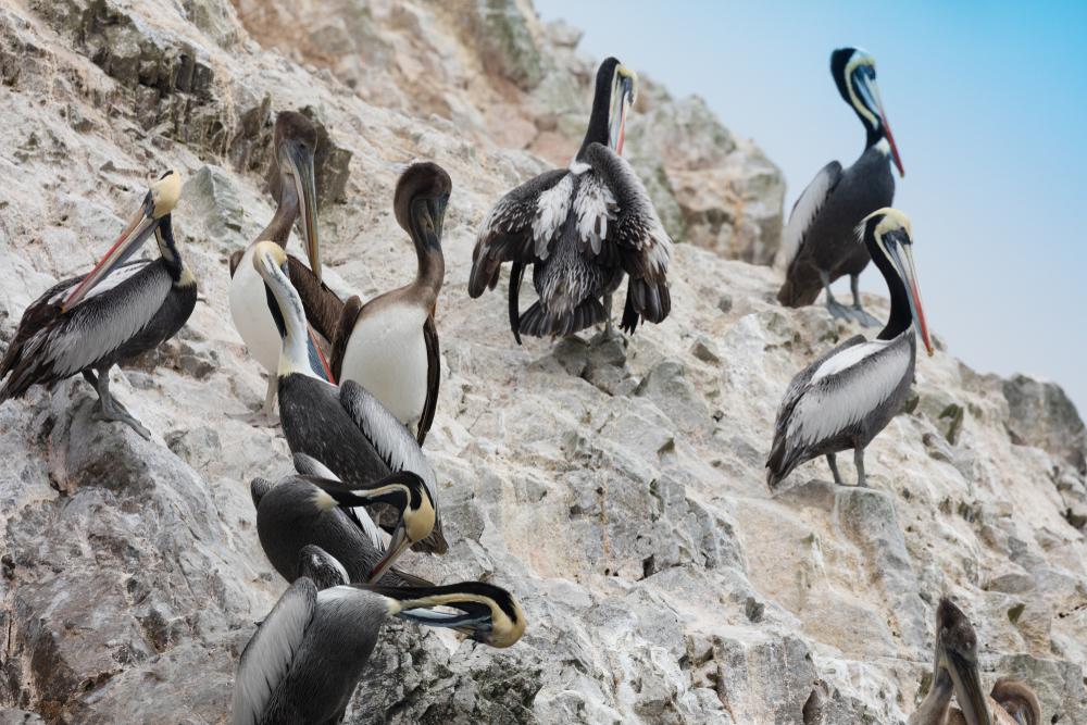 sea birds_guano.jpg