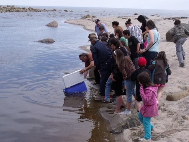 Activité avec l'école, remise à l'eau de jeunes saumons dans la rivière petite trinité