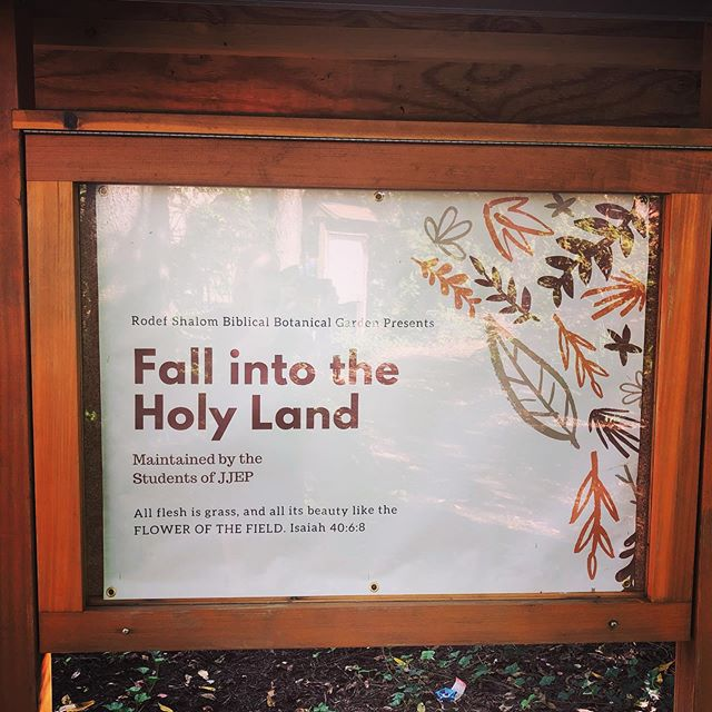 """We promised a special announcement, and here it is! For the first time ever the Rodef Shalom Biblical Botanical Garden is offering a special SECOND exhibit this year. Through October 15th only come and see """"Fall into the Holy Land,"""" an exhibit of mums and asters. Hours will be 10-2 Monday-Thursday, with special hours on high holidays. No tours will be available for this exhibit, but we have two special exhibit boards explaining the Biblical connection of mums. Stop by for this rare chance to visit the garden in the fall! For more information please call 412-621-6566. This exhibit is designed and planted by the students of JJEP.  #fall #autumn #pittsburgh #garden #gardening #biblicalgarden #rodefshalomcongregation #gardenofthegods #gardenpgh #mums #jjep #pghgardentrail"""
