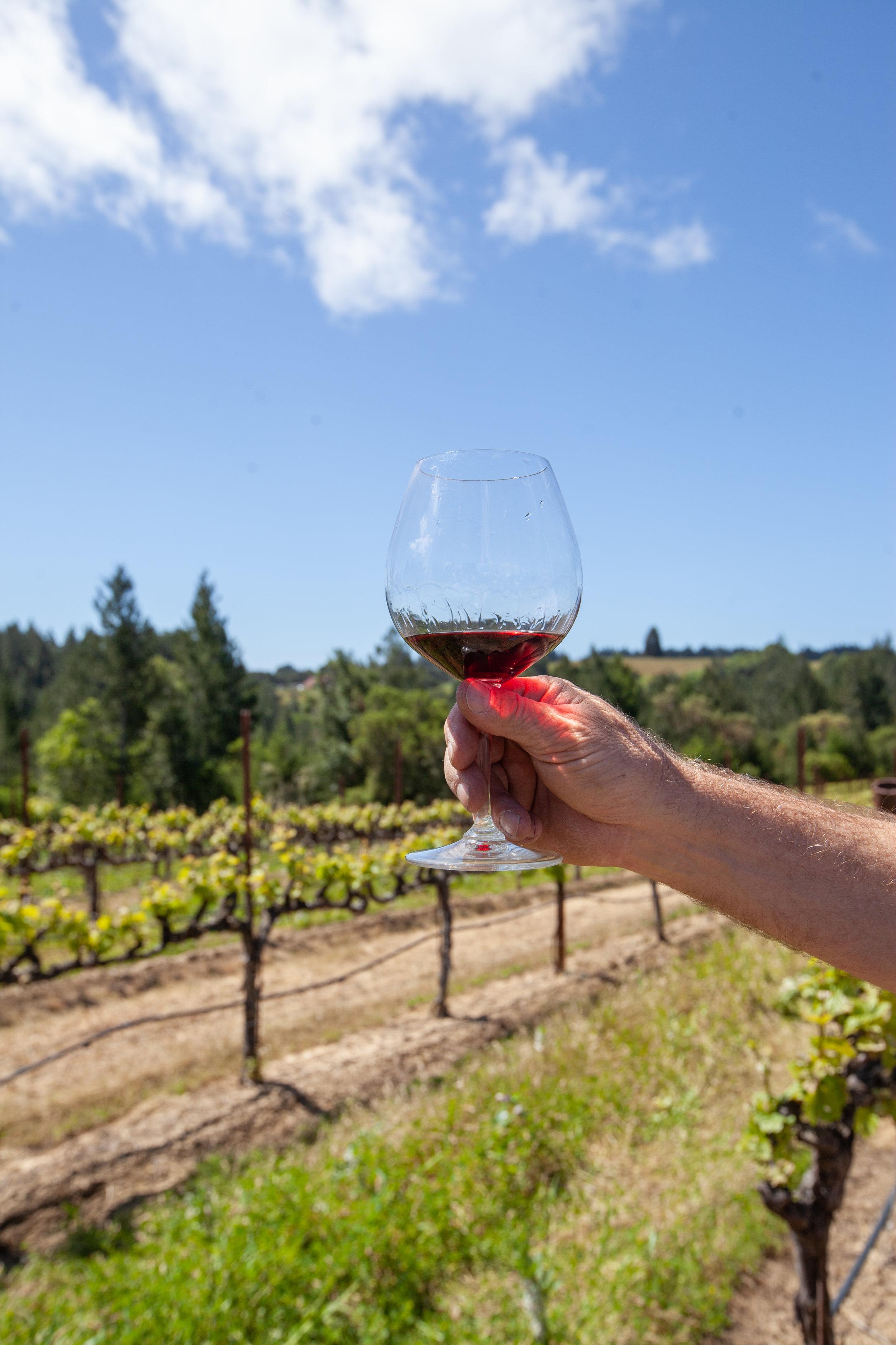 Chenoweth Pinot in vineyard