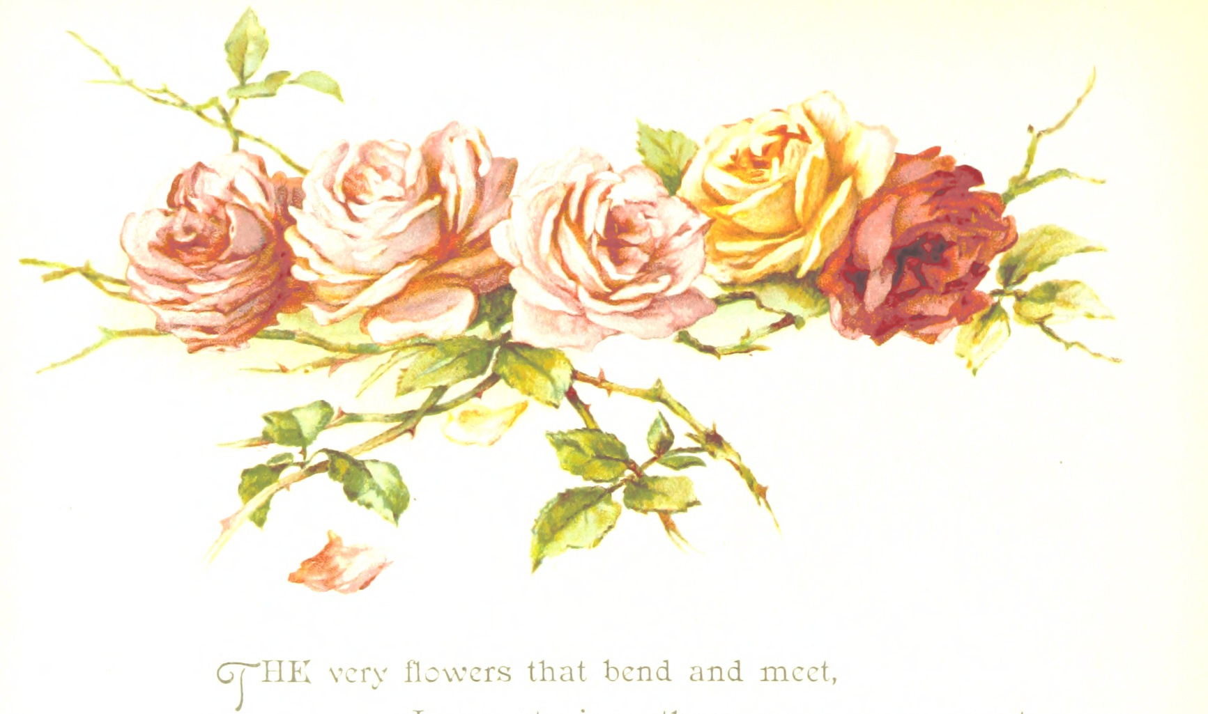 """""""We have noticed that roses have grown in popularity."""" -"""