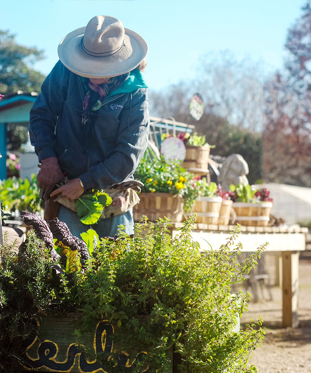 Lauren, our vegetable and herb expert at  Enchanted Gardens , attends to our resident raised bed. We use these plants for community Friday lunch as well as to show customers how the plants we sell look when established.