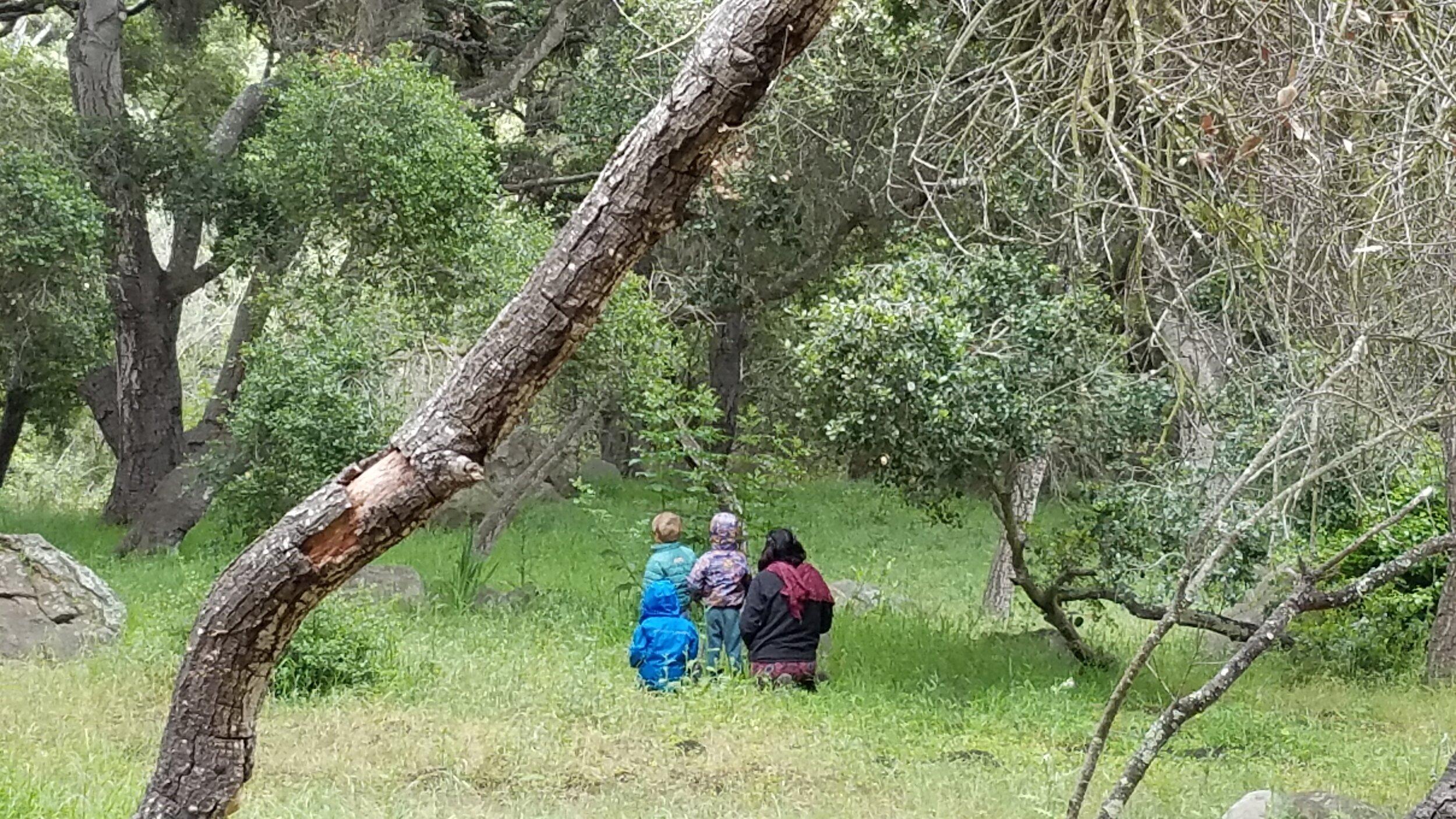 Wild Roots Forest School, Santa Barbara CA / courtesy of Lia Grippo