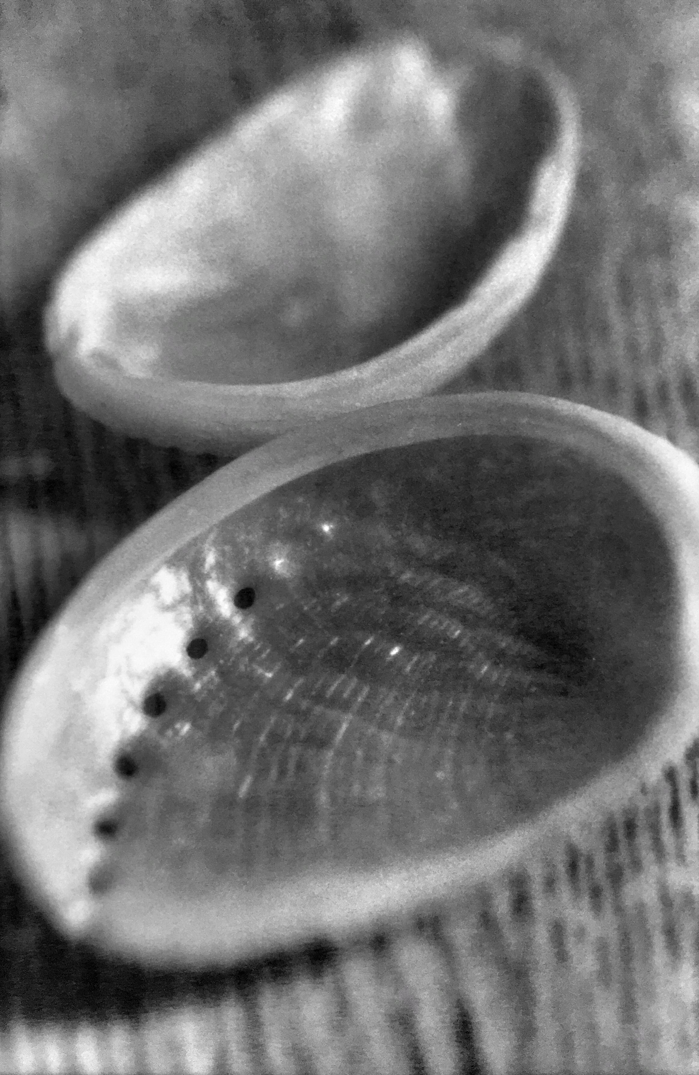 Abalone, 2002