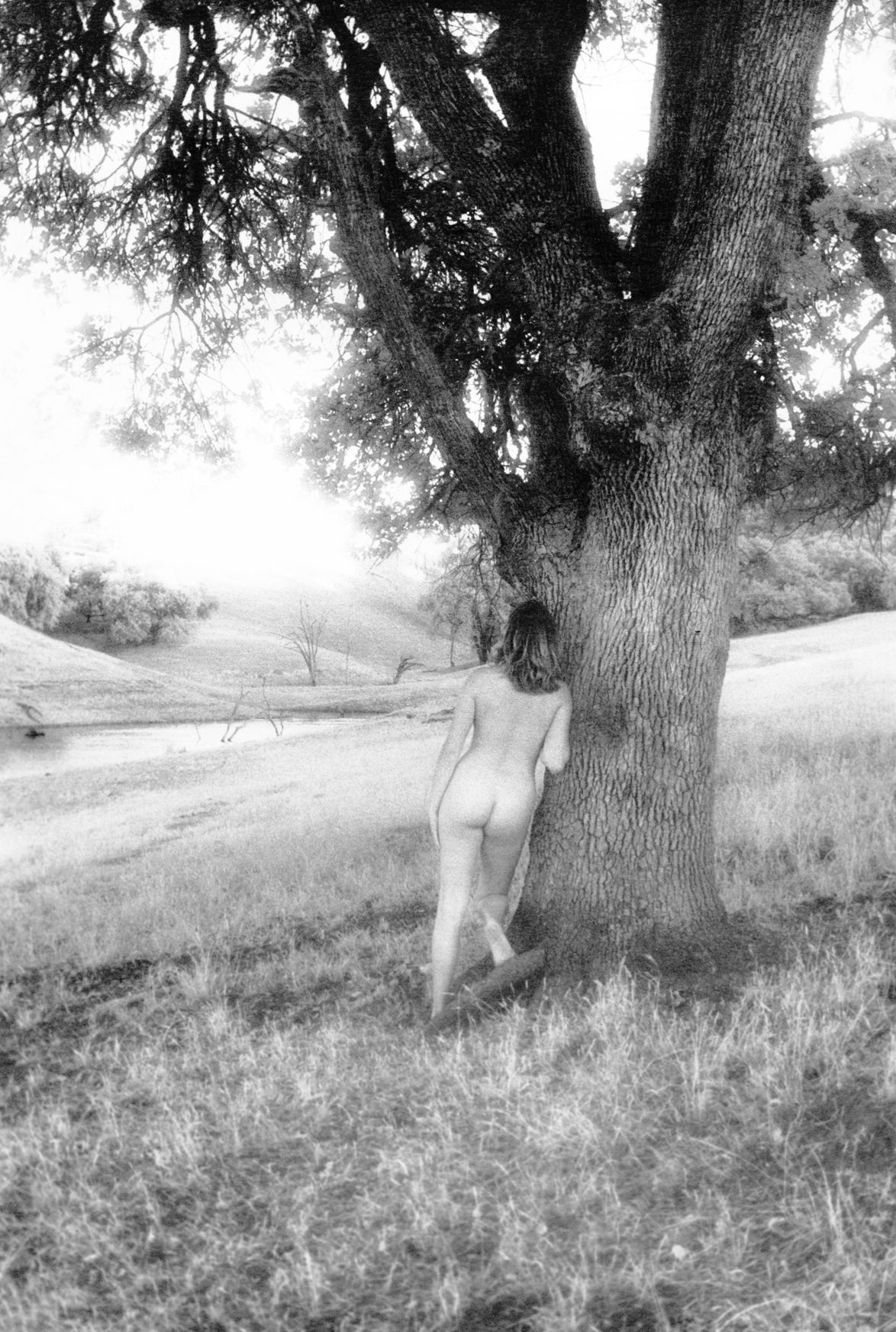 Behind the Oak, 2003