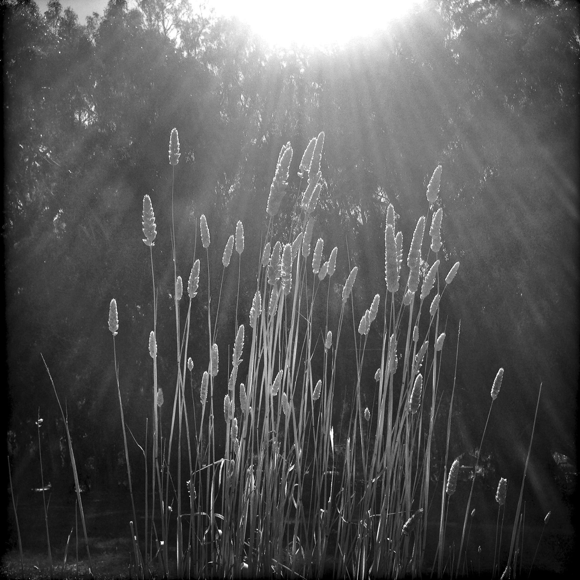 Autumn Sun, 2013