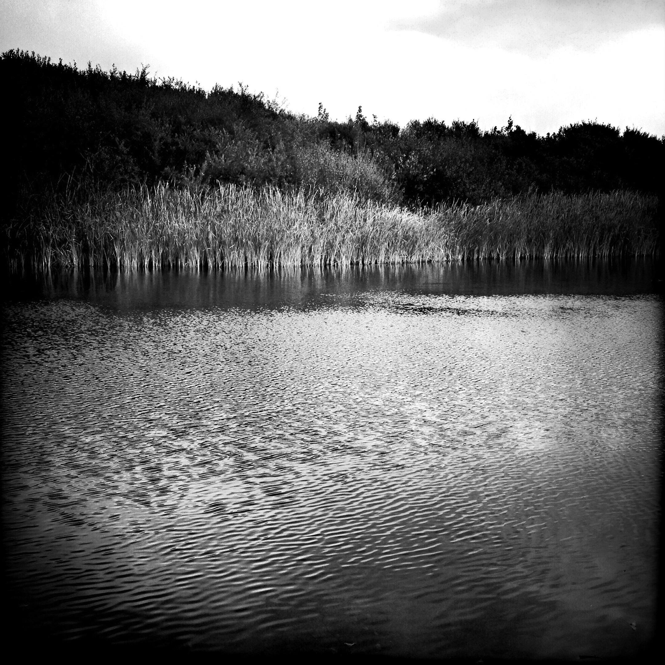 Rippling River, 2014