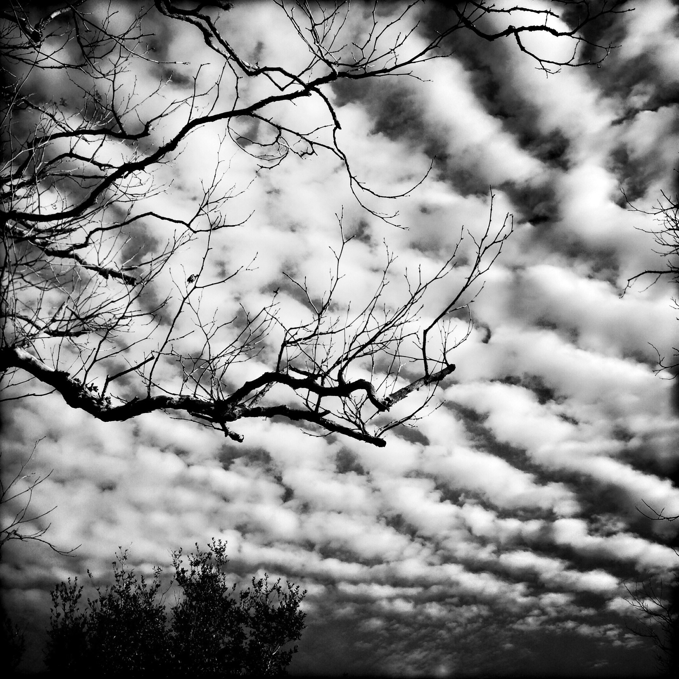 Sky and Branches, 2015