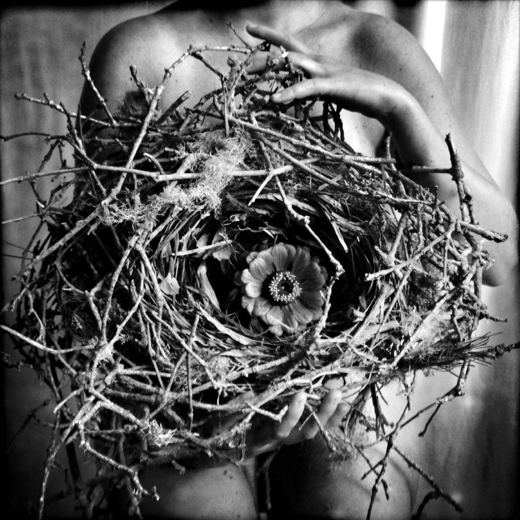 The Nest, 2015