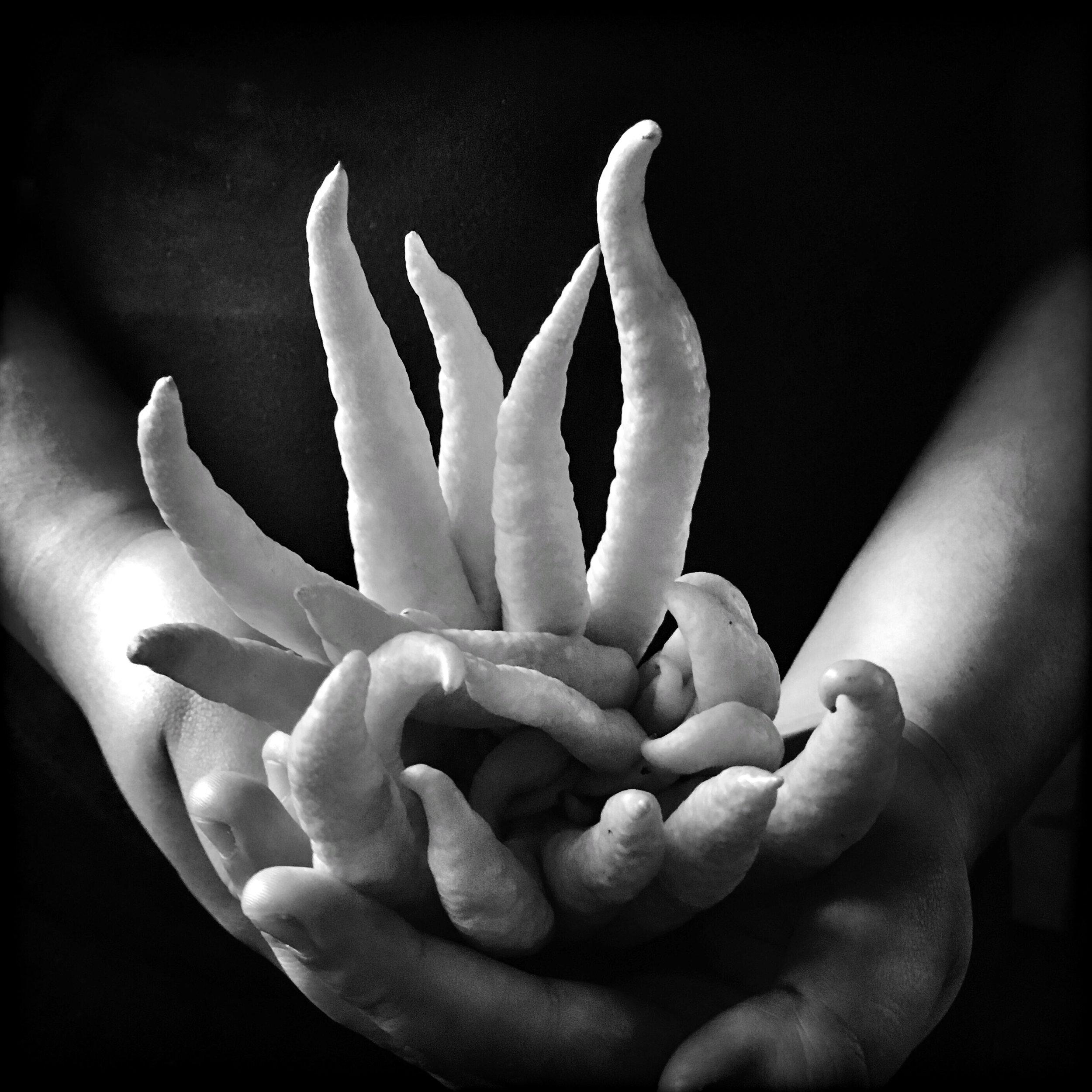 Buddha's Hand, 2018