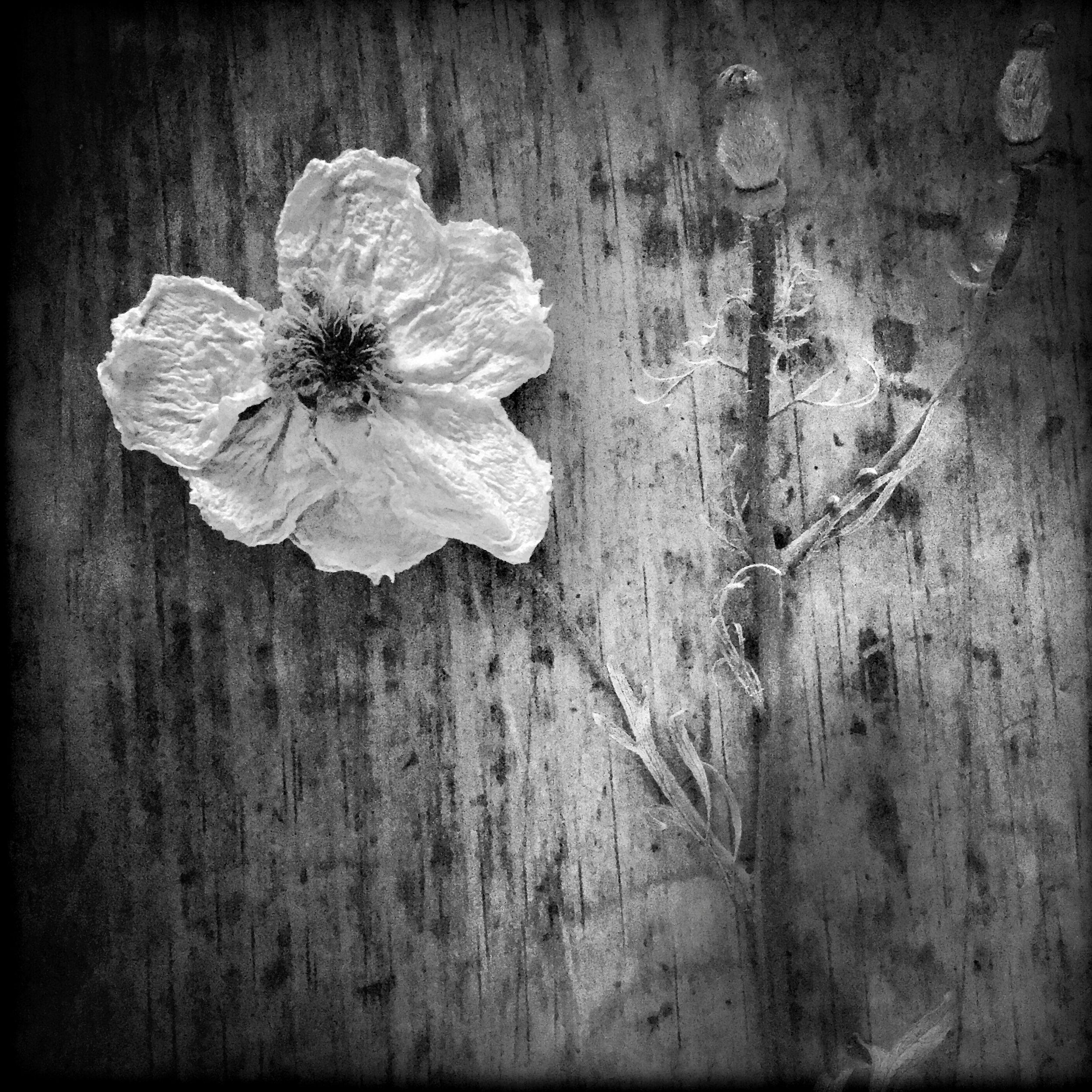 Resting Flower, 2018