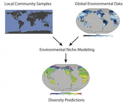 Left: Figure 1. Schematic of the environmental niche modeling methodology. Environmental niche modeling uses a statistical model to combine community samples with maps of environmental variables to generate predicted diversity maps or range maps. In this example, most of the samples are from North America, so although a global prediction is shown, a prediction to just North America may be better warranted.)