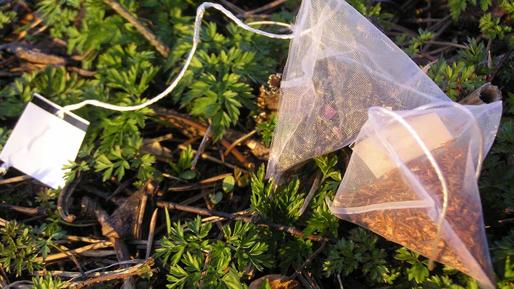 Tea bags, Photo by Judith Sarneel